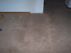 Anchorage, AK - Carpets - A Ladd Enterprises